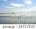 カモメ 鳥 海の写真 29717335