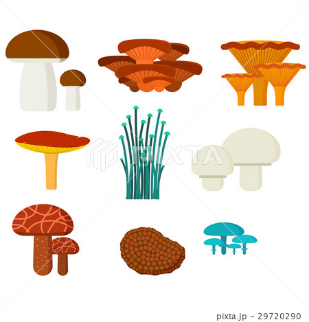 Mushrooms for cook food and poisonous nature meal 29720290