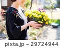 ガーデニング 花 パンジーの写真 29724944
