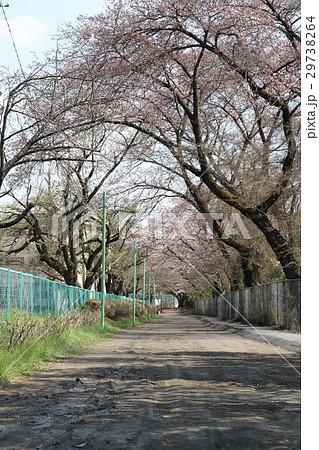 神奈川県相模原市 砂利道 一本道 29738264