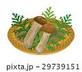 松茸 きのこ 食材のイラスト 29739151