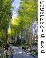 修善寺 竹林の小径 29739605
