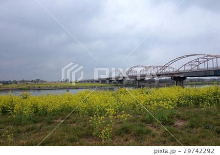 刀水橋の菜の花(太田市から) 29742292