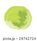 レタス【食材・シリーズ】 29742724