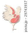 鶏肉 鶏 部位のイラスト 29743937