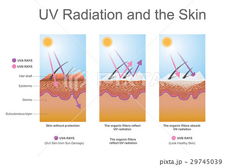 UV radiation and the skin. 29745039