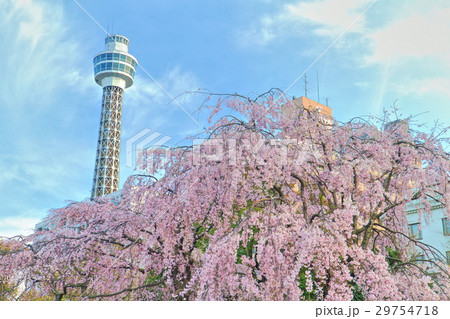 横浜マリンタワーと枝垂れ桜 29754718