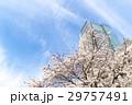 東京ミッドタウン 春 桜 29757491