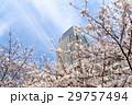 東京ミッドタウン 春 桜 29757494