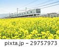 菜の花畑 小田急線 3000形   29757973