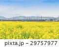 菜の花畑 小田急線 4000形 29757977