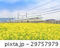 菜の花畑 小田急線 特急ロマンスカー 50000形 VSE 29757979