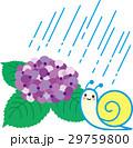 紫陽花 梅雨 雨のイラスト 29759800