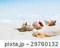 海辺・砂浜のイメージ 29760132