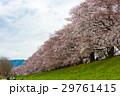 桜 29761415