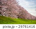 桜 29761416