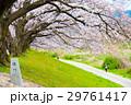 桜 29761417