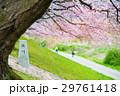 桜 29761418