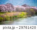 桜 29761420