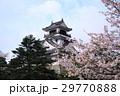 高知城天守閣と桜 29770888
