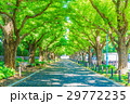 東京 明治神宮外苑の銀杏並木 29772235