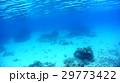 沖縄 阿嘉島のニシハマビーチのウミヘビ 水中写真 29773422