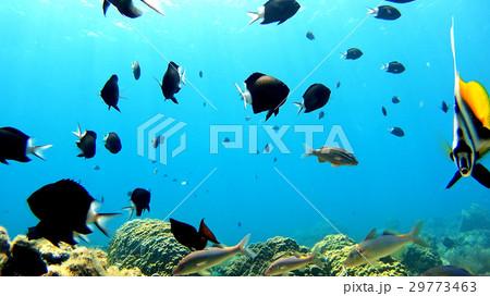 沖縄 阿嘉島のニシハマビーチ 水中撮影 29773463