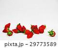 新鮮 イチゴ 29773589