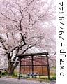 春のバス停 2 29778344