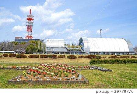 所沢航空記念公園・沈床茶園(4月) 29779776