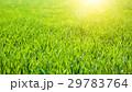草 グリーン 緑の写真 29783764