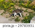 自然 グリーン 緑色の写真 29783931