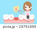 woman dentist with tooth 29791899