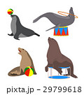 circus seals. Vector illustration. Set. Cartoon 29799618