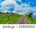 四国カルスト 四国 風景の写真 29800402