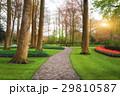 道 道すじ 散歩道の写真 29810587