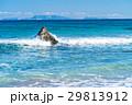 白浜海岸 海 波の写真 29813912