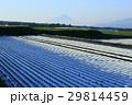 畑 農地 快晴の写真 29814459