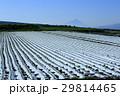 富士見町の農業地域から眺めた富士山 マルチシートの畑 29814465