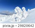 山形蔵王_快晴と樹氷群 29820642