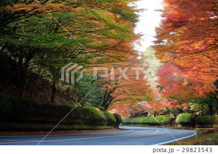 紅葉のトンネル 29823543
