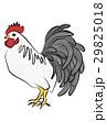 ニワトリのイラスト 29825018