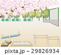 桜の木と公園の風景 29826934