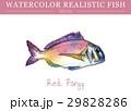 水彩画 透明水彩 サカナのイラスト 29828286