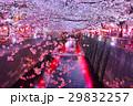 桜 夜桜 目黒川の写真 29832257