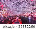 桜 夜桜 目黒川の写真 29832260