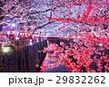 桜 夜桜 目黒川の写真 29832262