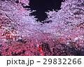 桜 夜桜 目黒川の写真 29832266