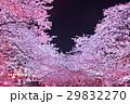 桜 夜桜 目黒川の写真 29832270