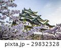 名古屋城 桜  29832328